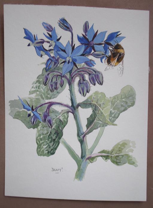 Borage and Bumblebee - bourrache et bourdon