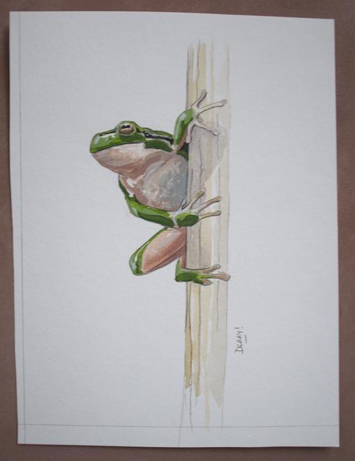 European Tree Frog - rainette verte