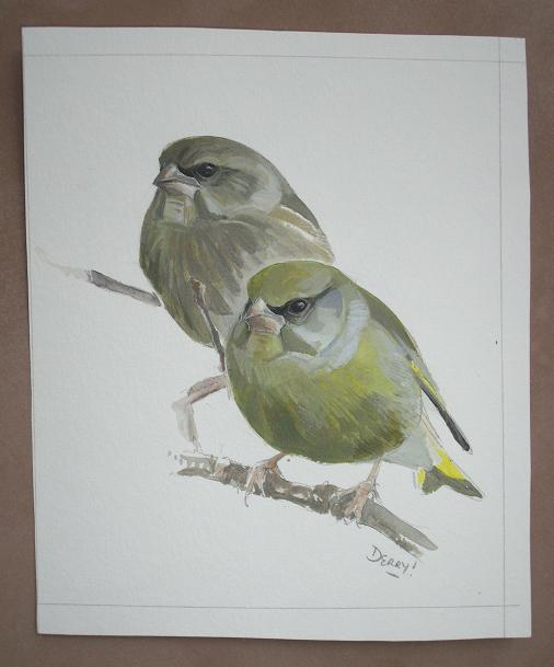 Greenfinches - verdiers