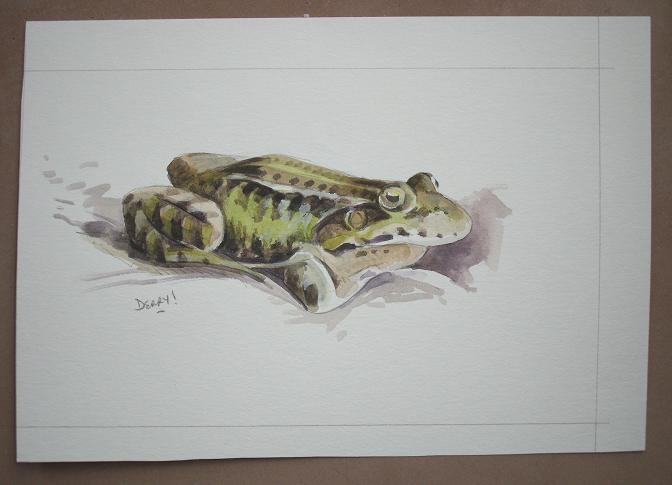 'Green' Frog - grenouille verte