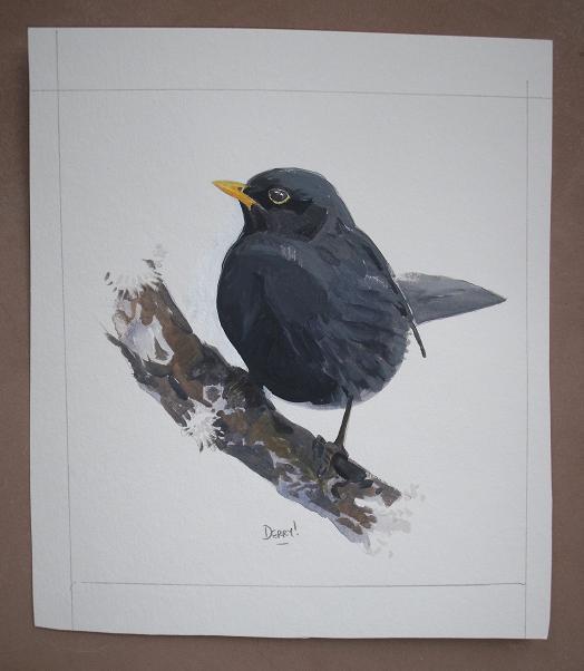 Blackbird - merle noir
