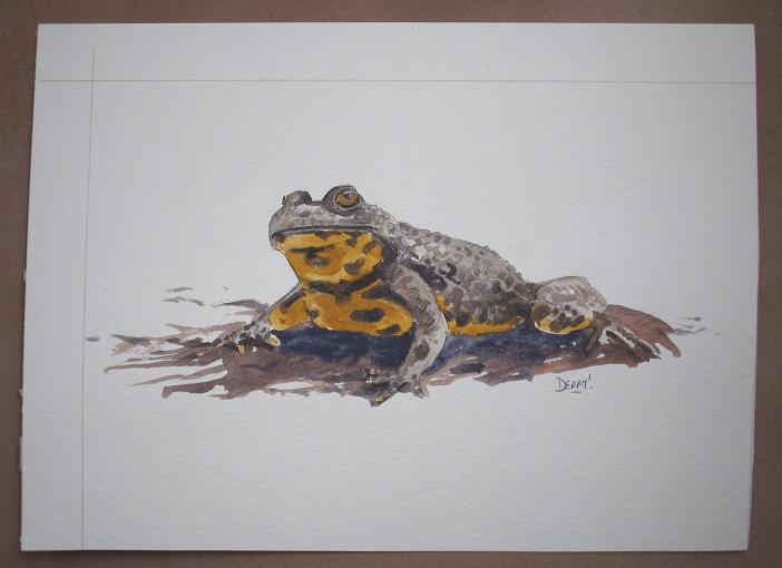 Yellow-bellied Toad - sonneur à ventre jaune